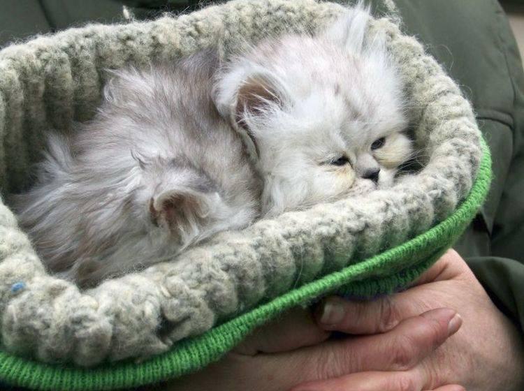 Junge Katze im Sack