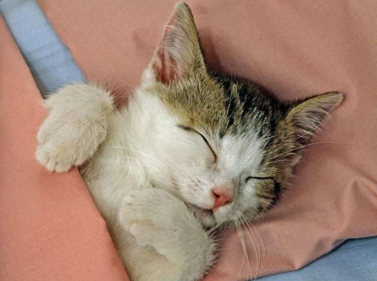 Katze-Bett-Schlafen