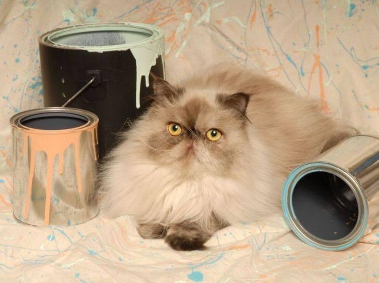 Perser-Katze-Farbeimer-Kunst