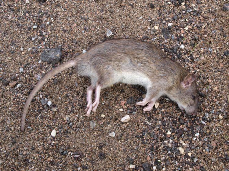 Tierqälerei: Fiese Jagd auf Kleintiere
