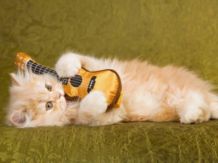 Rote Katze mit Gitarre