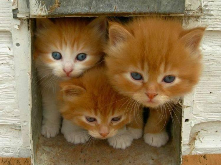 Rote Katzenbabys Katzenklappe