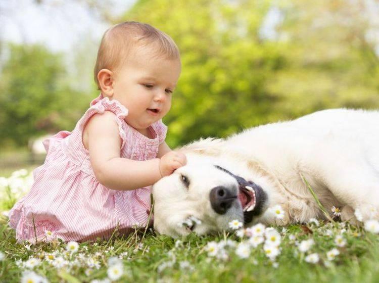 Baby mit Golden Retriever Hund auf der Wiese