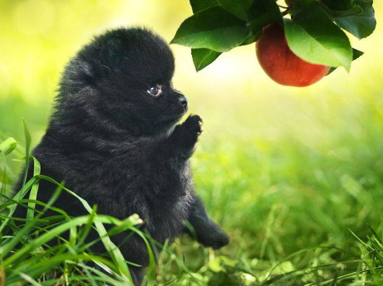 Vitamine für den Hund: Gesundheit und Abwehrkräfte