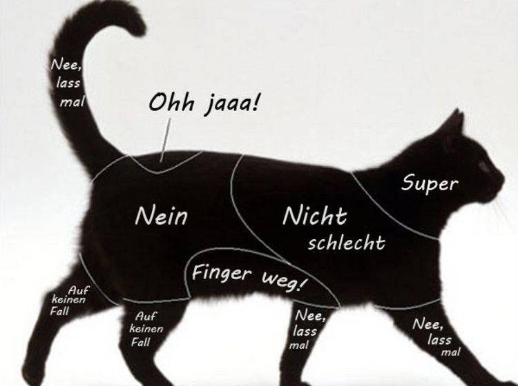 Streichelzonen einer Katze. Ein Fünkchen Wahrheit ist dran
