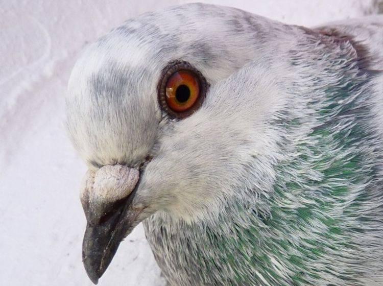 Über den Dächern von Berlin: Tauben schwelgen in Luxus