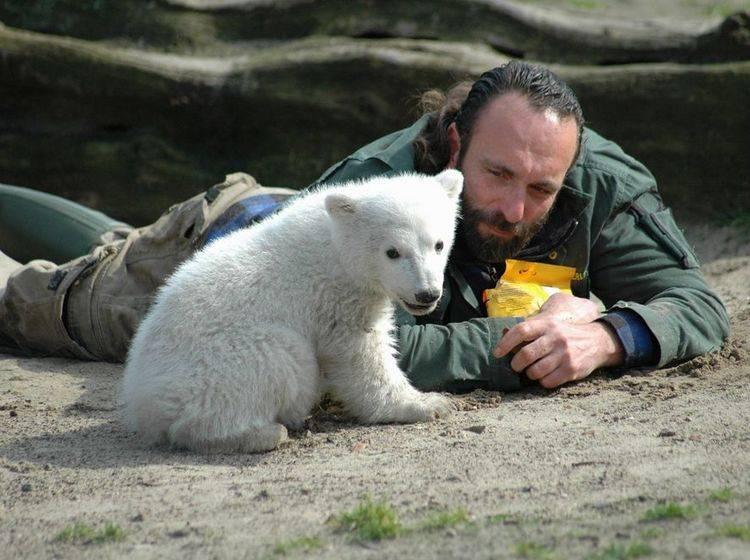 Knut ist ab sofort augestopft im Berliner Museum für Naturkunde zu sehen