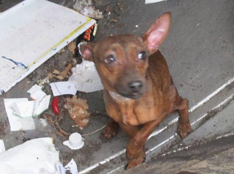 Ein Hund wurde in Bremen aus dem Müll gerettet – Bild: Polizei Bremen