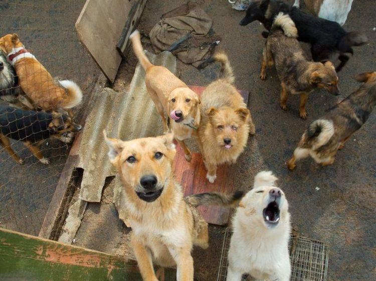 Tierheimhunde sollen es durch das Bemühen von Danielle und Matt Curtis besser haben