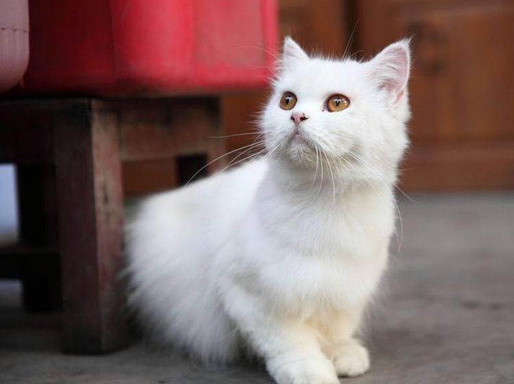 """Platz 1: Der beliebteste Katzenname war 2012 """"Lilly"""" mit y am Ende"""
