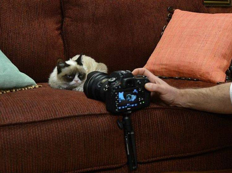 Grumpy Cat beim Fotoshooting mit Friskies – Bild: Facebook / Friskies
