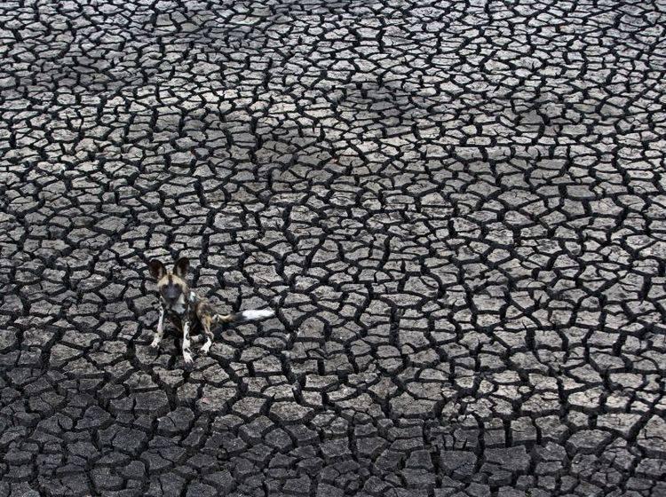 Dog Days — Bild: Kim Wolhuter / Veolia Environnement Wildlife Photographer of the Year 2012