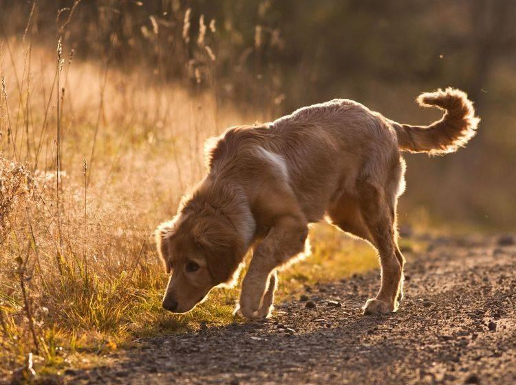 Vorbeugung gegen Würmer: Aufpassen, was der Hund frisst — Bild: Shutterstock / jurra8