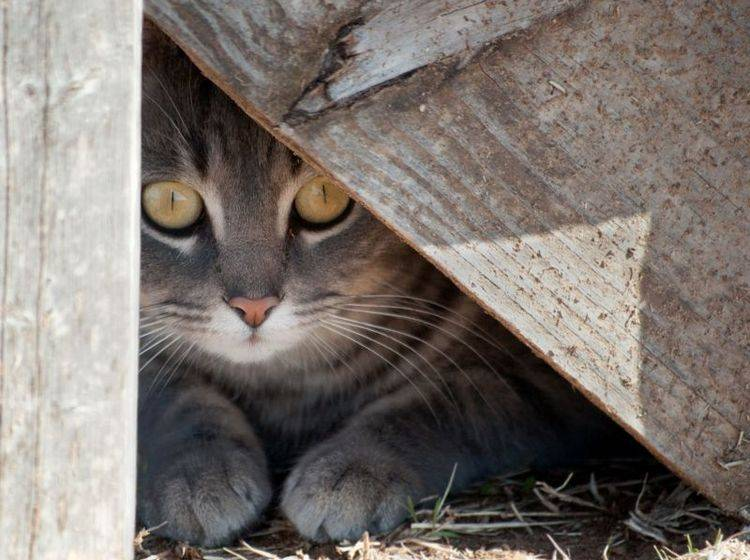 """""""Psst, nicht verraten, ich bin in der Scheune!"""" — Katze in ihrem Lieblingsversteck — Bild: Shutterstock / Sari ONeal"""