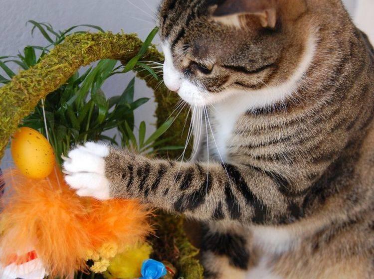 Katzen und Osterdeko: Immer gut im Blick behalten — Bild: Shutterstock / Eric Fahrner