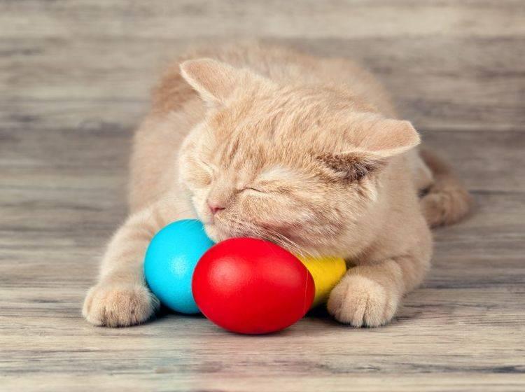 Ostern für Katzen: Schöne Geschenke zum Frühlingsfest — Bild: Shutterstock / vvvita