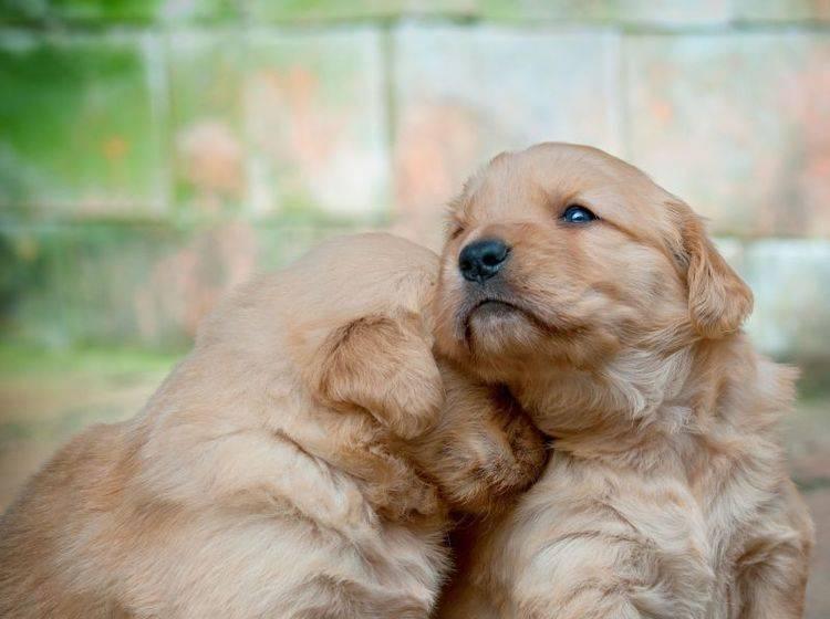 Peta am Pranger: Tötete die Tierrechtorganisation 30.000 Tiere? — Bild: Shutterstock / johannviloria