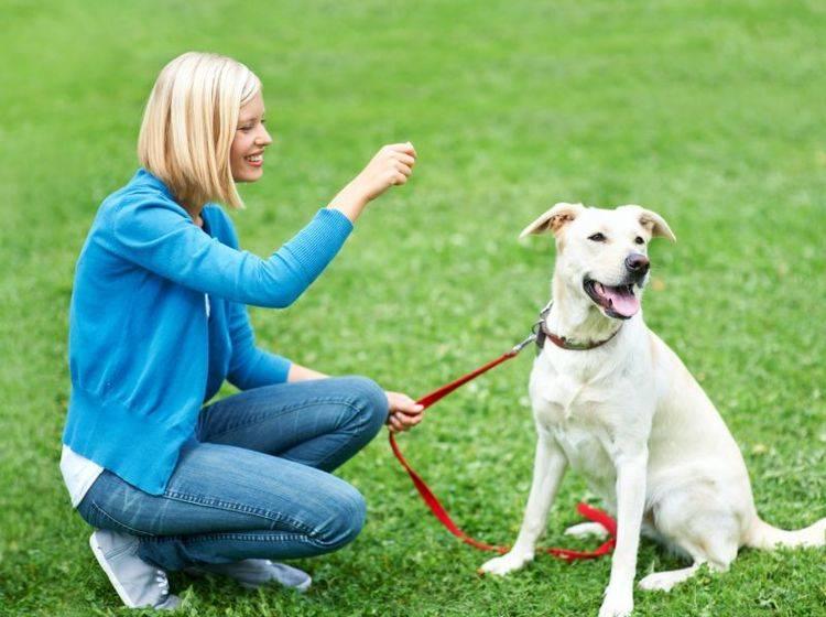 Der Hundeführerschein stellt verschiedene Anforderungen an das Herrchen — Bild: Shutterstock / Yuri Arcurs