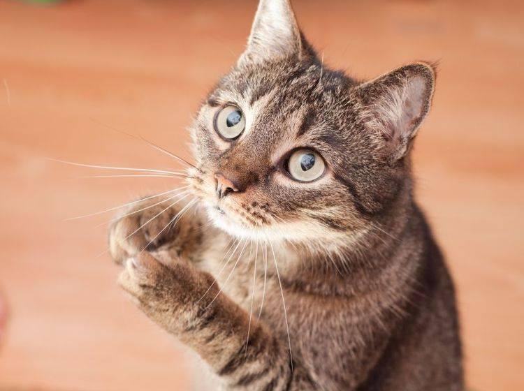 Stark bleiben: Nicht die Katze entscheidet, wie viele Leckerlis es gibt — Bild: Shutterstock / Andrzej Tarnawczyk