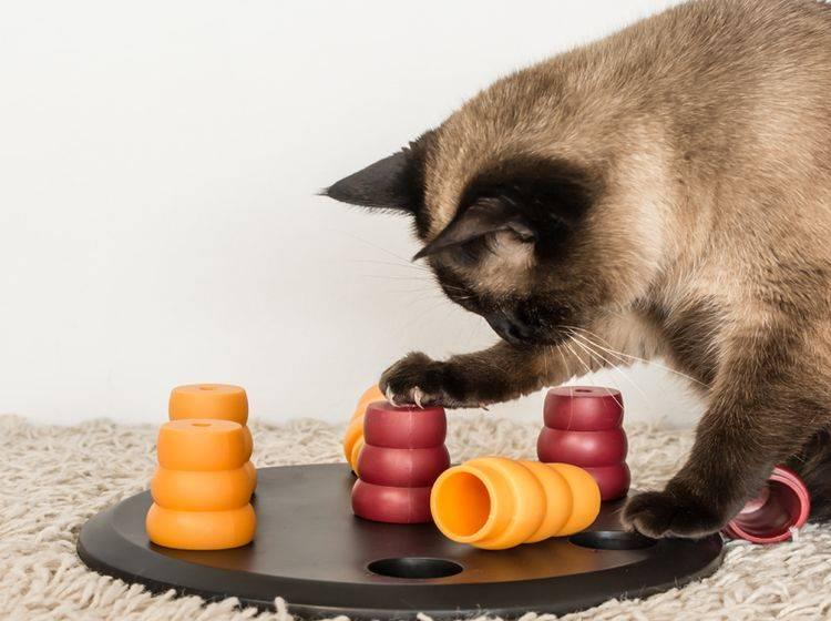 Fummelbretter machen sich den Jagdtrieb und die Neugierde von Katzen zunutze - Bild: Shutterstock / Agata Kowalczyk