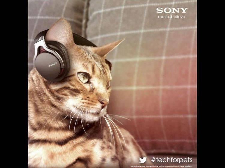 Weltneuheit von Sony? Kopfhörer für Katzen — Bild: 2013 Twitter / SonyUK