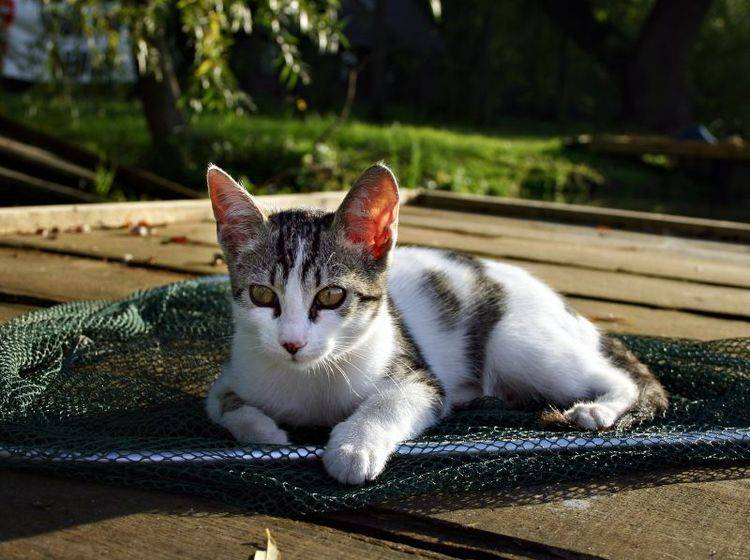 Ein Katzennetz sichert Ihren Balkon — Bild: Shutterstock: Gabriella Rajnai