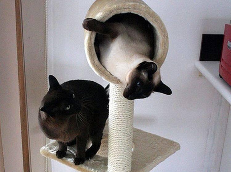 Groß genug? Kratzbaum für zwei Katzen — Bild: (CC) Flickr / Safetypinheart