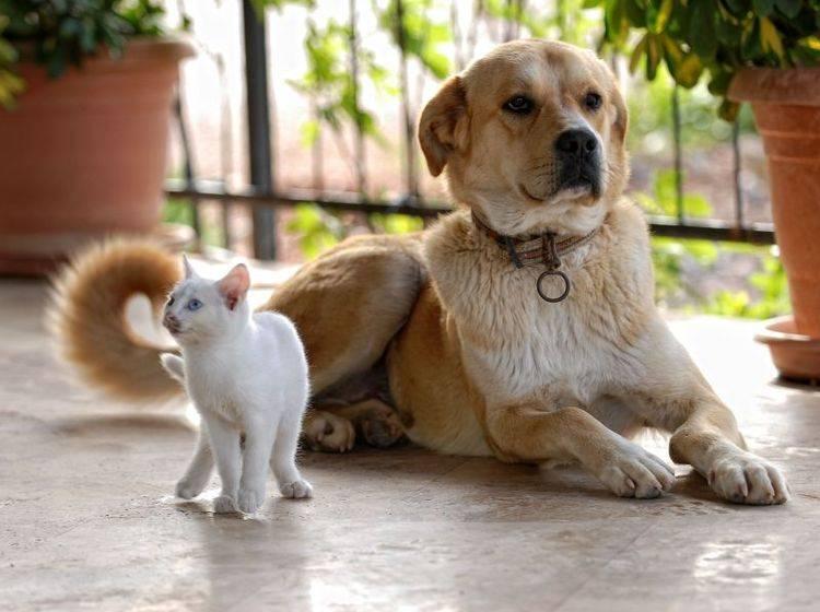 Kommunikation Zusammenführen Von Katze Und Hund