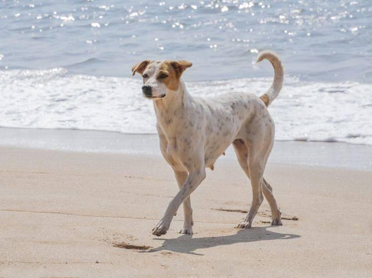 Urlaub mit Hund: An der Nordsee gibt es viele tolle Hundestrände — Bild: Shutterstock / Erik Kalibayev
