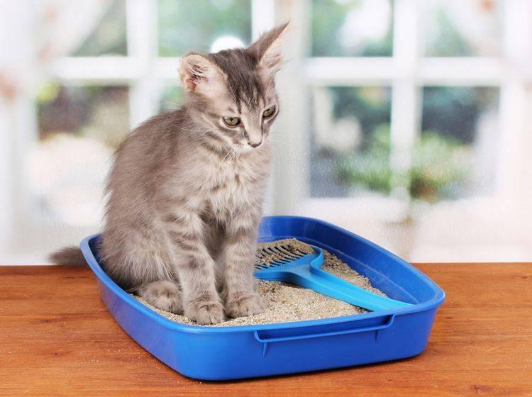 Passendes Katzenklo kaufen? Die Auswahl ist groß