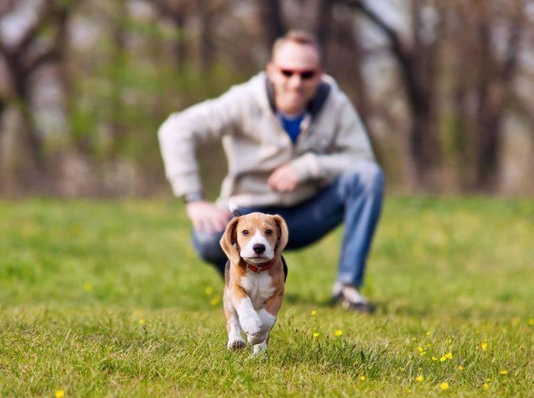 Hundetraining mit jungen Hunden: Hört er schon aufs Wort? — Bild: Shutterstock / Solovyova Lyudmyla