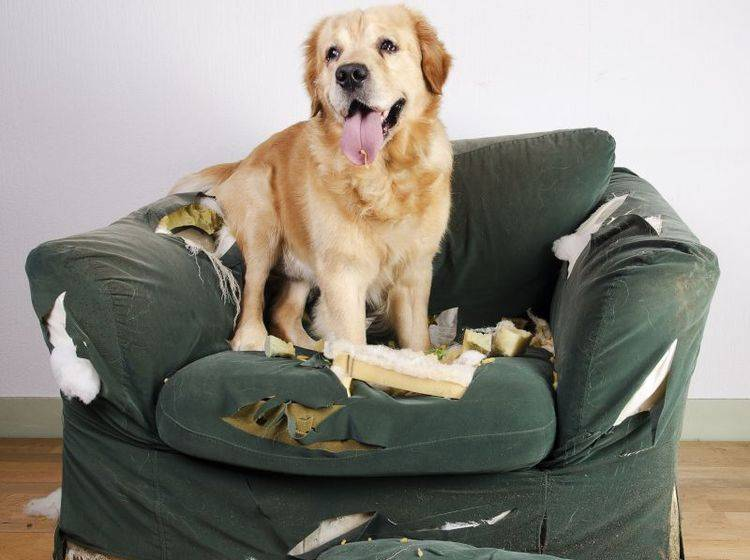 Welche Schäden deckt die Hundehaftpflicht ab? — Bild: Shutterstock / Jeroen van den Broek