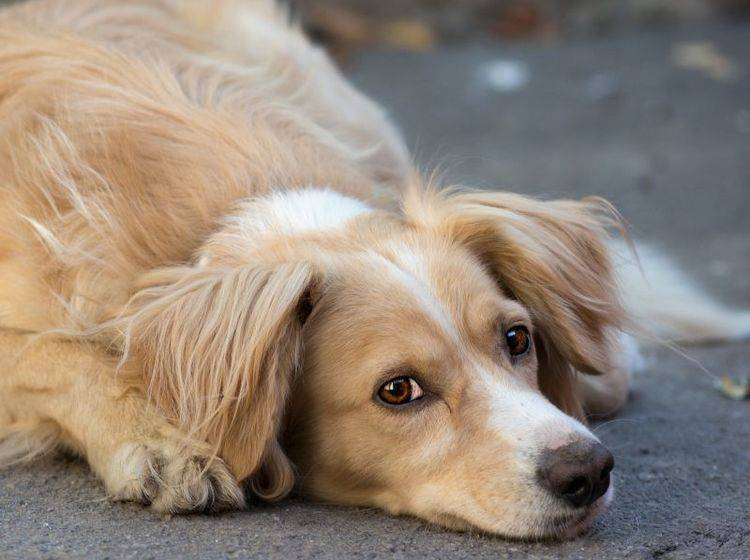 Giardien beim Hund: Häufig bleiben sie lange unentdeckt — Bild: Shutterstock / Amor Kar