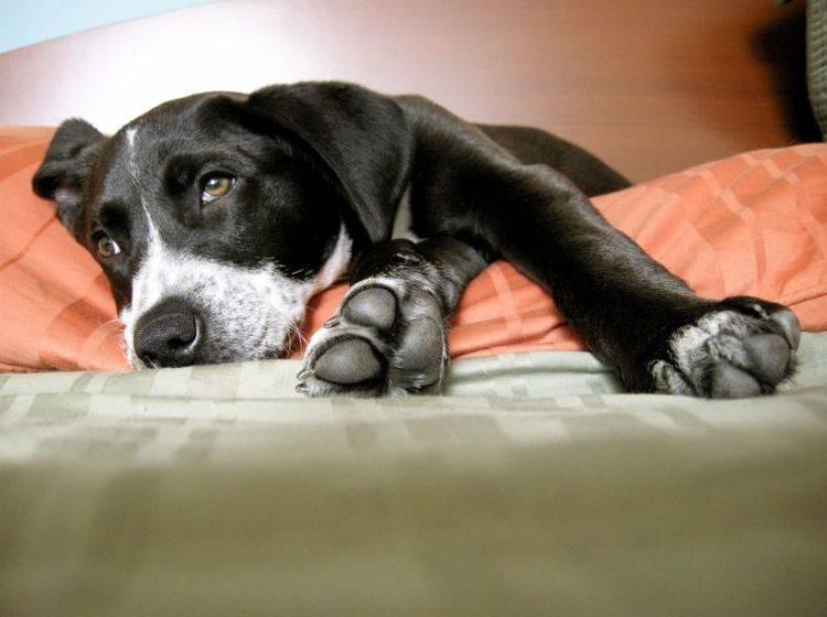Es gibt verschiedene Ursachen für Arthrose beim Hund — Bild: Shutterstock / Shannon West
