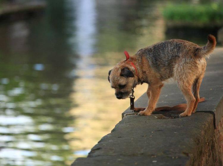 Das Hochwasser hat viele Tiere in Notlagen gebracht — Bild: Shutterstock / jezzerharper