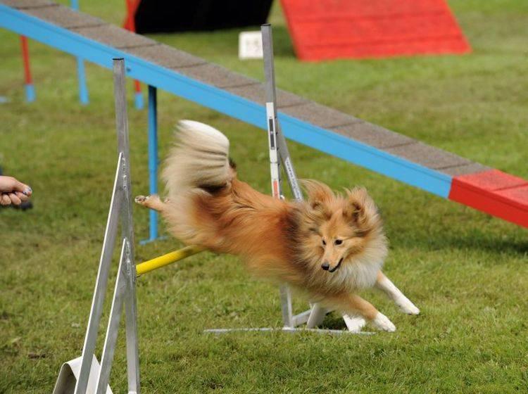 """""""Klick-Klack"""": Für das Clickertraining mit Hunden braucht man als erstes ein Clicker-Modell — Bild: Shutterstock / Rolf Klebsattel"""