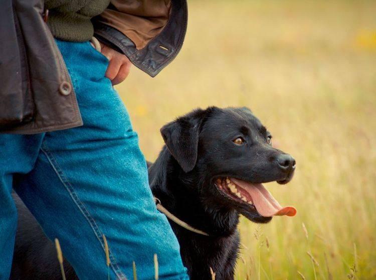 Clickertraining mit Hund eignet sich für Profis und Amateure — Bild: Shutterstock / rashworth
