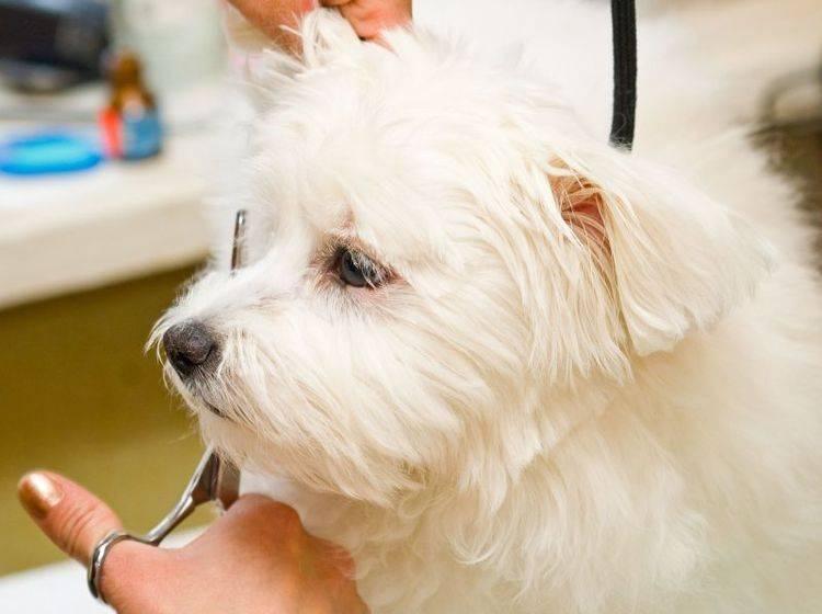Hundefell sollte man nie ganz scheren — Bild: Shutterstock / siamionau pavel