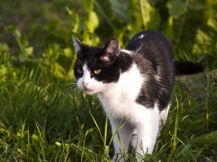 Wofür kommen Versicherungen für Katzen auf? — Bild: Shutterstock / Pozezan