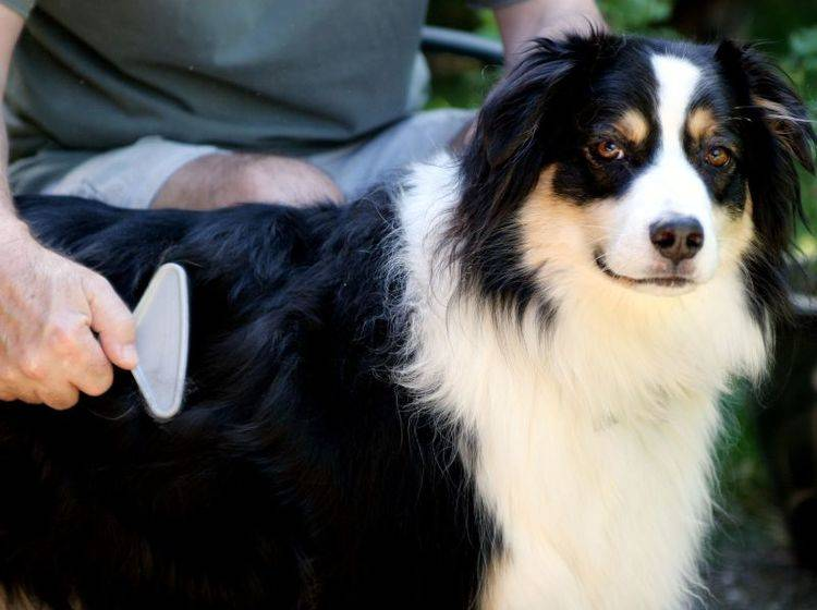 Tipps für ein schönes Hundefell: Accessoires für Zuhause — Bild: Shutterstock / Jennie Book