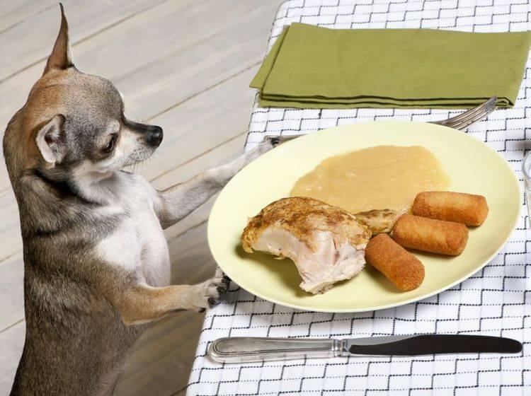 Lebensmittel, die Hunde nicht fressen sollten zu kennen ist wichtig — Bild: Shutterstock / Eric Isselee