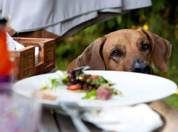 Grillreste sind nichts für Hunde — Bild: Shutterstock / vgm