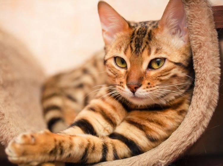 Für Katzenbesitzer: Vier Tipps gegen Möbelkratzen — Bild: Shutterstock / Shvaygert Ekaterina