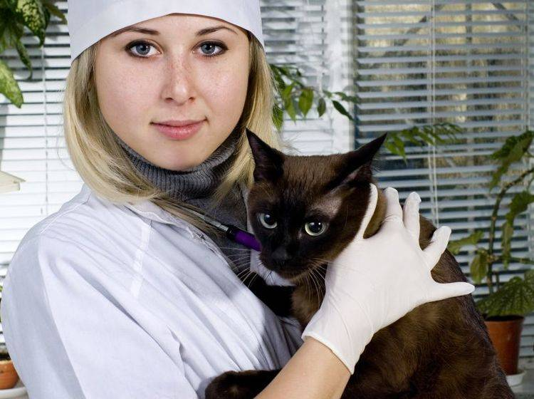 Katzen mit Haarausfall: Diagnose und Behandlung übernimmt der Tierarzt — Bild: Shutterstock / Byelikova Oksana