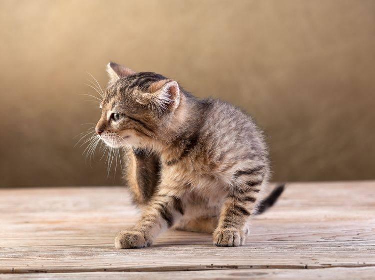 Ursachen für Flöhe bei Katzen lassen sich vor allem im Freien finden