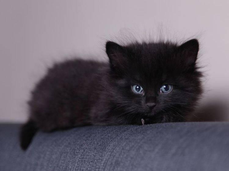 Flohbehandlung bei Katzen: Ein Tierarzt kann helfen — Bild: Shutterstock / Foonia