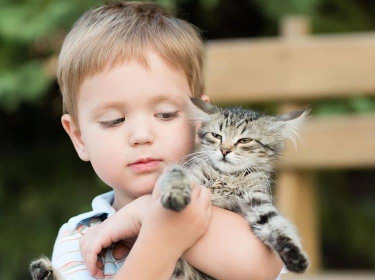 Vorsicht: Katzenflöhe sind auch auf Menschen übertragbar — Bild: Shutterstock / Osokina Liudmila
