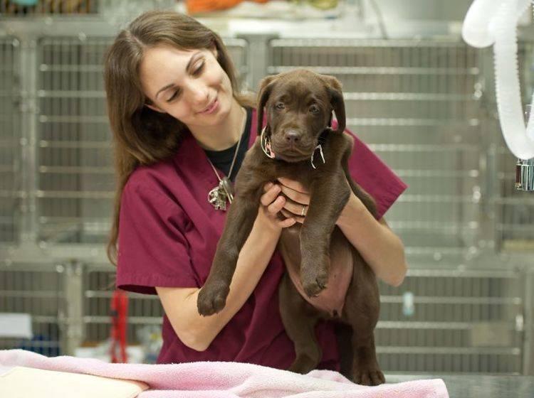 Hunde mit Epilepsie: Bei früher Behandlung ist die Prognose gut — Bild: Shutterstock / aspen rock