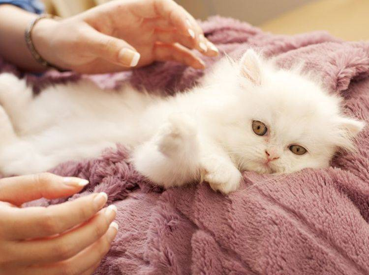 Homöopathie für Katzen: Notfalltropfen sind im Ernstfall eine große Hilfe — Bild: Shutterstock / DreamBig
