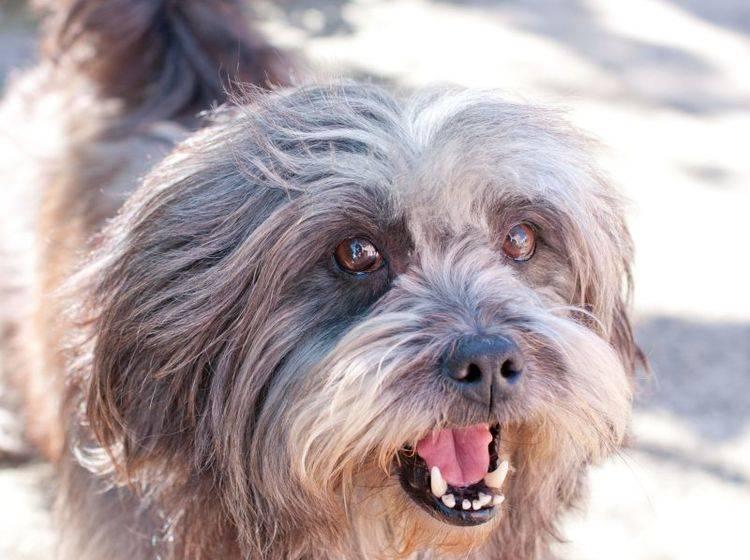 Wenn der Hund ständig bellt ist ein wenig Training gefragt — Bild: Shutterstock / johannviloria
